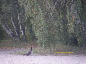 Johannas.2011.04.11 013.Lilla Holmen.Fåglar