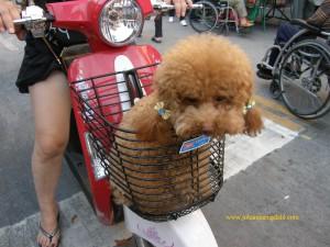 Maj 2011 Hund x